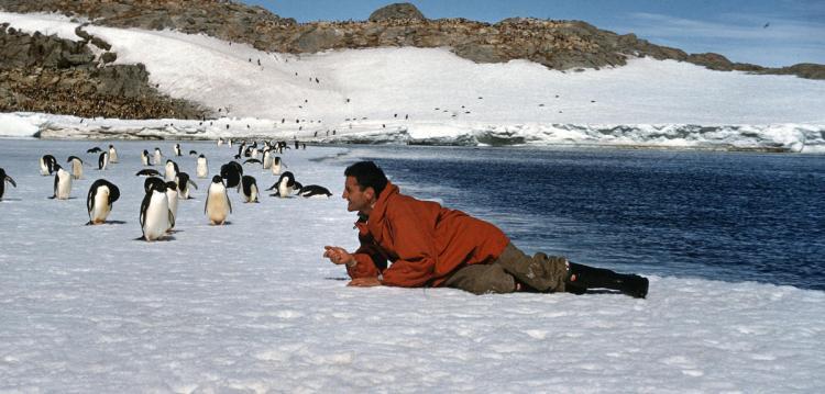 Claude Lorius au milieu des manchots, près de la base de Dumont-d'Urville. Crédit photo EXPEDITIONS POLAIRES FRANCAISES